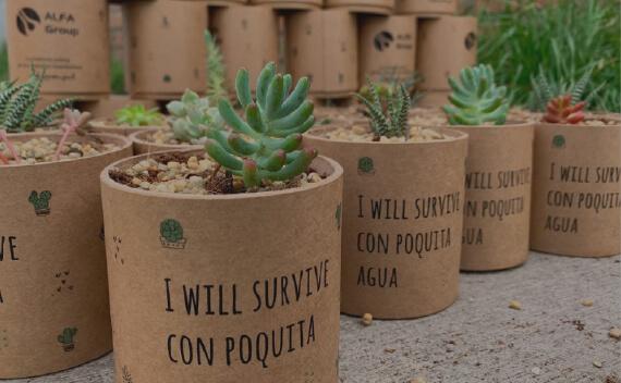 planta viva regalo coporativo